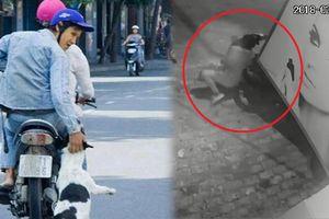 Kinh hoàng trộm chó quăng thòng lọng bắt chó kéo lê cả chủ trên mặt đường