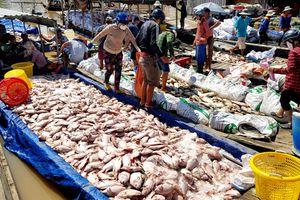 Đồng Nai: Hàng trăm tấn cá làng bè sông La Ngà chết trắng mặt nước