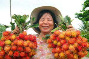Cải thiện phẩm chất trái cây khi thời tiết bất lợi