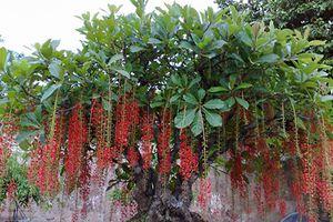 10 cây cảnh nhất định phải trồng trong nhà để tiền vào như nước