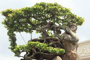Choáng váng loạt siêu cây cảnh của đại gia Hải Dương