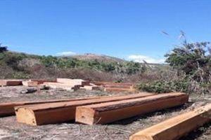 Đắk Nông: Bắt nhóm đối tượng khai thác hơn 30m3 gỗ