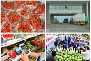 Xuất khẩu nông sản- Cần chấp nhận luật chơi chung