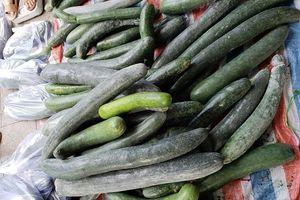 Vietcomreal giải cứu bí xanh 6.000 đồng/1kg