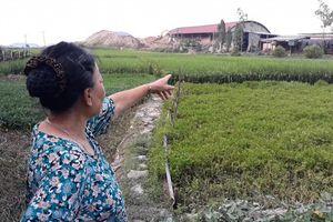 Mê Linh(Tp. Hà Nội): Nhà máy gạch Hoàng Kim 'bức tử' môi trường, người dân kêu cứu.