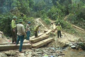 Quảng Bình: Khởi tố vụ án phá rừng phòng hộ xung yếu