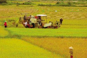 Agribank đồng hành phát triển kinh tế vùng ĐBSCL bền vững