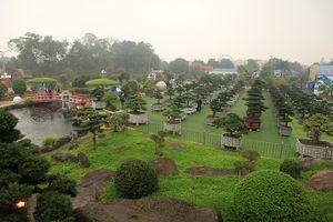 'Lác mắt' với vườn tùng triệu USD của đại gia Thái Nguyên