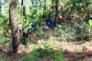 Hà Tĩnh mạnh bạo giao đất rừng cho dân làm chủ