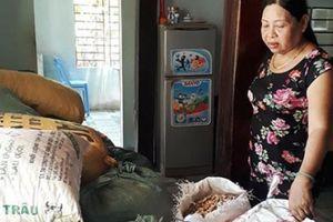 Quảng Nam: Thuốc xịt đậu phộng tự rụng-tin đồn 'dồn, ép' nông dân
