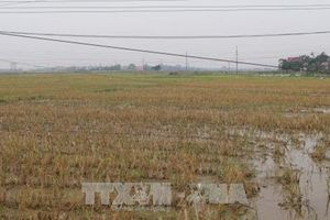 Báo động tình trạng bỏ hoang ruộng đất