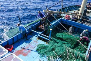 Ngư dân Quảng Nam 'quay lưng' với lưới rê