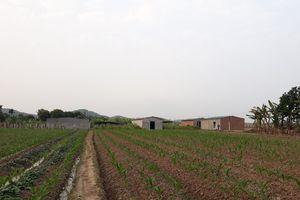 Chủ tịch xã cùng hàng chục hộ dân đua nhau xây nhà trên đất nông nghiệp