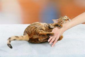 Đừng để 'bạn' thành 'kẻ thù' của chó mèo