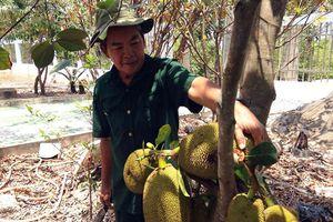 Kỳ diệu lão nông xây 'biệt phủ' hoành tráng nhờ nuôi tôm, trồng cây