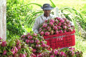EC sẽ tăng cường kiểm tra dư lượng thuốc BVTV thanh long Việt Nam