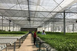 Thanh Trì: Khởi điểm mô hình trồng rau thủy canh