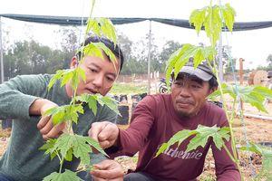 Rẽ ngang trồng rau