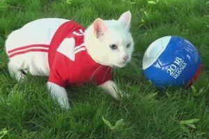 Chân dung 'nhà tiên tri' mèo dự đoán các trận đấu tại World Cup 2018