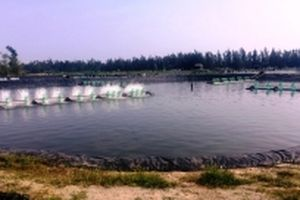 Từ thất bại của đề án nuôi cá bơn, cá mú ở Hà Tĩnh
