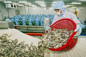 Doanh nghiệp xuất khẩu tôm đang bước qua 'vùng đáy'