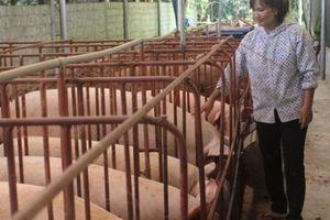 Giá heo hơi hôm nay 6/6: Ngừng 'nhảy múa' ở mốc 50.000 đồng/kg, nguồn cung lợn vẫn khan hiếm