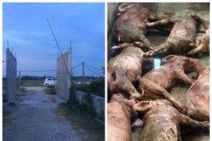 Hà Tĩnh: Điều tra kẻ đâm chết và làm bị thương 17 con lợn