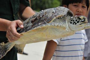 Thả cá thể rùa quý hiếm về với biển