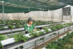 Đi tìm át chủ bài cho nông sản Việt