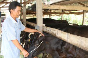 'Quốc tế hóa' hợp tác xã nông nghiệp (bài 3)
