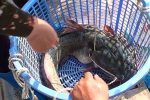 Cận cảnh chợ cá trên núi tràn ngập 'thủy quái sông Đà', ai xem cũng muốn mua