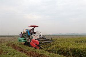 Nam Định: Vụ lúa xuân thắng lợi
