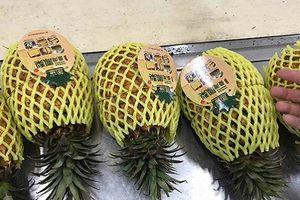 Cận cảnh dứa 'khủng' Đài Loan gây sốt thị trường Việt