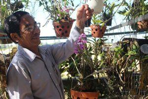'Đột nhập' vườn lan tiền tỷ của thầy giáo dạy Văn ở Quảng Ngãi