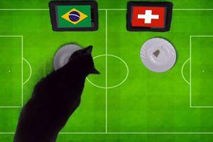 'Tiên tri' mèo đen dự đoán trận Brazil và Thụy Sĩ