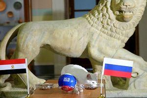Mèo điếc Achilles lại trổ tài tiên tri Nga thắng Ai Cập