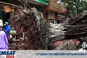 Tai nạn do cây gãy đổ, ai chịu trách nhiệm?