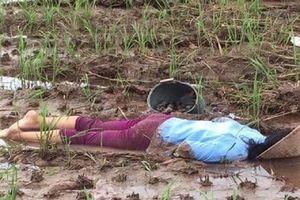 Bàng hoàng phát hiện thi thể phụ nữ nằm bất động giữa cánh đồng