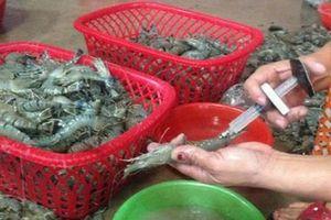 Cần xử lý nghiêm hải sản biển bơm tạp chất