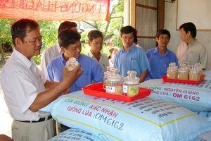 An Giang quản lý chặt sản xuất, kinh doanh lúa giống