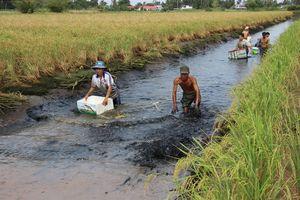 Nuôi tôm - lúa thích ứng biến đổi khí hậu