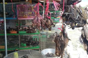 Phải đóng cửa chợ nông sản tận diệt chim trời
