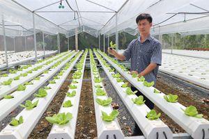 Kỹ sư tin học trồng rau thủy canh cho thu nhập cao