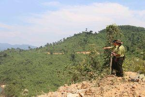 Thừa Thiên Huế: Giám sát việc giao rừng sản xuất và xử lý lấn chiếm đất rừng