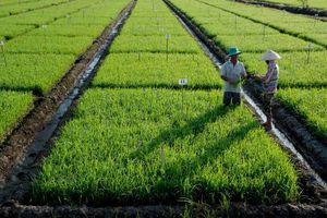 Kiên Giang: Tái cơ cấu ngành nông nghiệp theo hướng phát triển bền vững