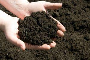 Lãng phí nguyên liệu sản xuất phân bón hữu cơ