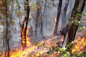Cụ ông 70 tuổi tử vong khi chữa cháy rừng