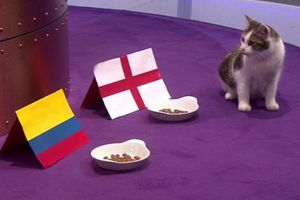 Tiên tri mèo dự đoán Anh và Colombia có thể đá 11m