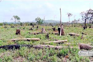 Nóng bỏng cuộc chiến giữ rừng Tây Nguyên (Kỳ cuối: Giải pháp nào quản lý, bảo vệ rừng hiệu quả)