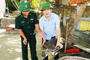 Thả rùa quý hiếm nặng 40 kg về biển
